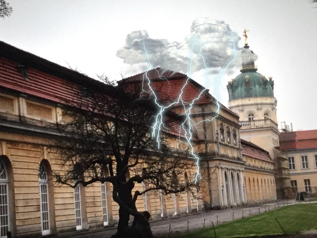 Der gefährdete Baum